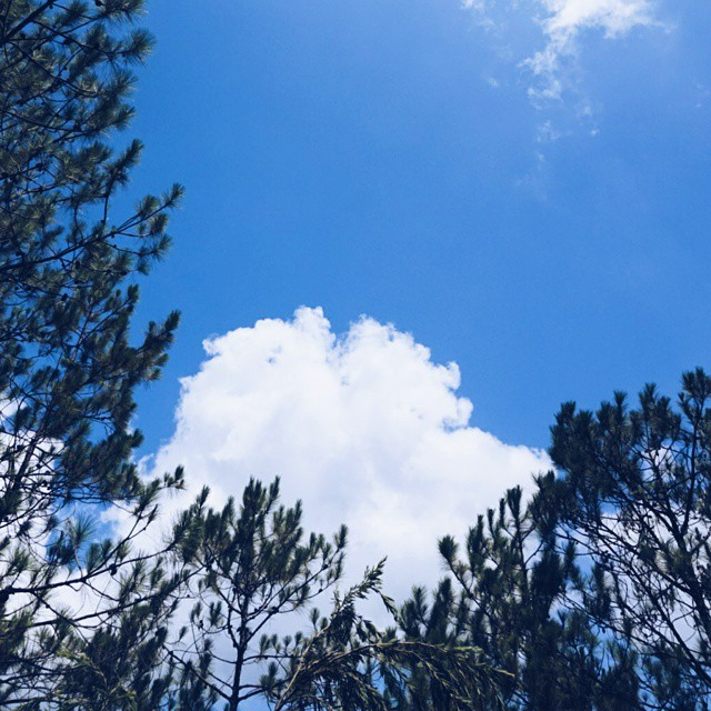 At a mile above sea level, Dalat is synonymous with blue-sky days, especially between November and April. PHOTO BY @yukihua_1012